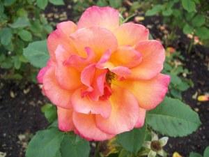 Bright Flower